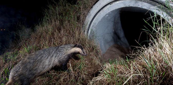 ecoponts  ecoducs des voies dediees pour les animaux